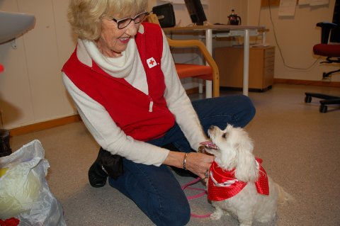 Besøkshunden Pippa har gledet mange. Er det flere hunder som vil være med?
