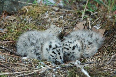 PASS PÅ: I disse dager klekkes det nye fugleunger rundt om på de 39 reservatene i indre Oslofjord.