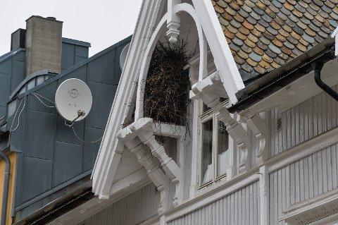 MØNET: Her oppe er det skjærene har valgt å bygge og bo. Godt skjermet fra vær og vind, med gode støttespillere som naboer.