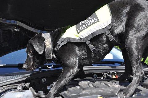 MONTY: Valutahunden Monty fant pengene som den 33 år gamle spanjolen forsøkte å smugle ut fra Torp.