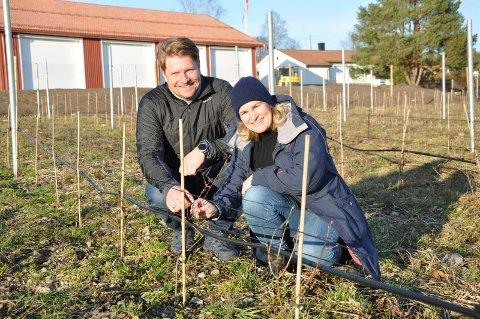 """""""SUPERBÆR"""": Bjarne Kapstad Trollsås og kona Cecilie Skjerven har plantet 500 haskapbusker på Grubbestad Gård. Nå venter de spent på sommerens avling."""