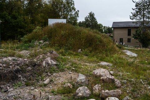BYGGETOMT: I tilsvaret til kommunen bestrides kommunens påstand om at fellingen av eiketreet i Valberggrenda 22 i Stokke er uaktsom eller forsettlig.
