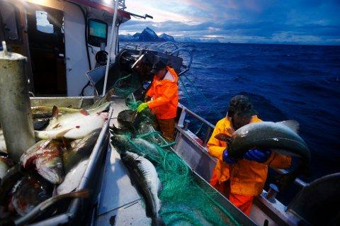 Fiskerne bør betale en avgift til fellesskapet for å få lov til å høste av fisken i havet, foreslår et regjeringsoppnevnt utvalg.
