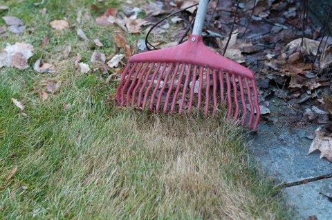 En omgang med plenriva er bra. Det fjerner dødt gress og løv som skygger for vekstpunktene til gresset.