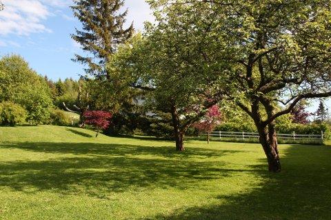Noe av suksessen bak en grønn og fin plen ligger i å velge riktig frøblanding. De vanligste plenfrøblandingene i Norge er en miks av rødsvingel og engrapp.
