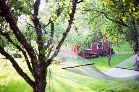 – Ikke gå løs på naboens trær uten tillatelse, oppfordrer Huseiernes Landsforbund.