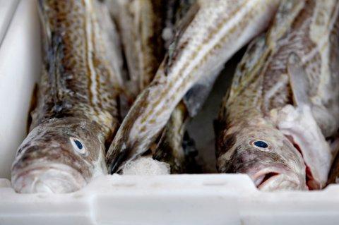 Oslo  20120928. Fra kl 07 hver morgen kan man kjøpe fersk fisk og reker rett fra båten på Rådhusbrygga. Helene Kristoffersen er en av fiskerne som selger fra reketråleren oppkalt etter henne selv. Båten er en familiebedrift og selv har hun jobbet deltid som fisker i 12 år. Hun er i tillegg heltidsstudent og leder for Indre Oslofjord Fiskerlag. Denne høst-ettermiddagene har rekene blitt revet bort. Men småtorsk, stortorsk, lyr, kolje og sei er å få kjøpt. Den ble fisket i går natt i Oslofjorden utenfor Drøbak. Foto: Anette Karlsen / NTB scanpix