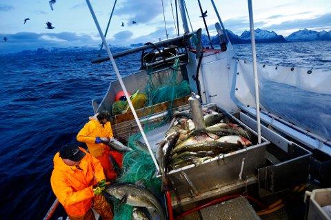 Kystflåten er ryggraden i det norske hvitfiskfisket, her fra skreifisket utenfor Senja i 2015. Den havgående trålflåten er etter hvert blitt omstridt, og det er bred enighet om at fiskerireguleringen ikke oppfyller intensjonene.