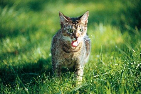 Det er viktig å ta vare på kattenes helse.