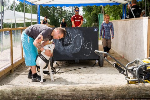 ENTUSIAST: Thomas Holmedal fra Skiptvet roser sin amerikanske bulldogg Hera.
