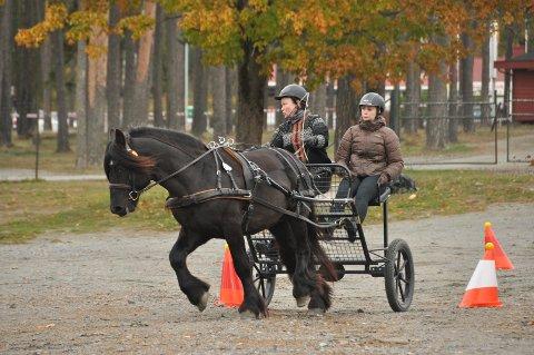 PRESISJON: I denne øvelsen løp hestene mellom kjegler med baller, med mål om å ikke treffe kjeglene så ballene ramlet ned.