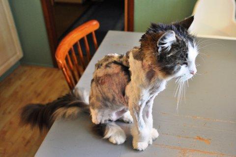 MEDTATT: Dolly er skamklipt med tilsynelatende både saks og barbermaskin.