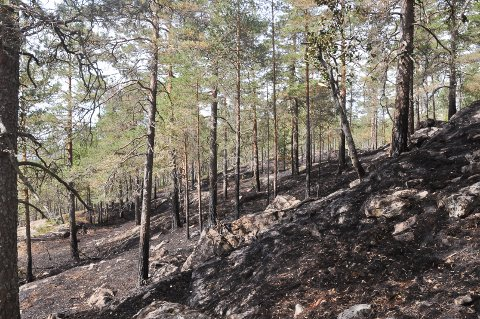 Skogbrann Båstad 17. juli 2018