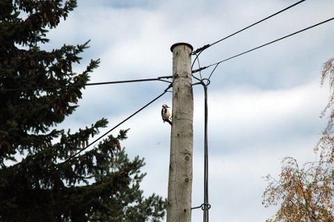 TELEFONSTOLPE: De gamle telefonlinjene har gjort tjenesten i 100 år. Hakkespetten er blant faktorene som gjør at linjene til tider trenger vedlikehold. ARKIVFOTO: Guri Rønning