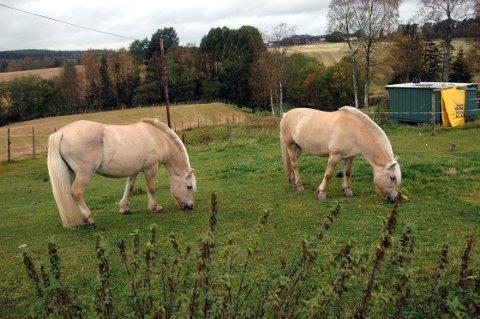 Disse hestene er ikke en av de savnede, men fjordingen som er borte er helt lik. Eier Reidar Skubberud håper noen kan hjelpe ham med å få hesten tilbake.