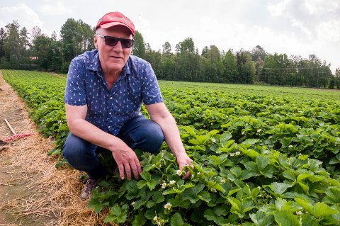 Thorer Olai Egeland dyrker jordbær i Spydeberg, Rygge og Ski. Før helgen startet selvplukk i Rygge.