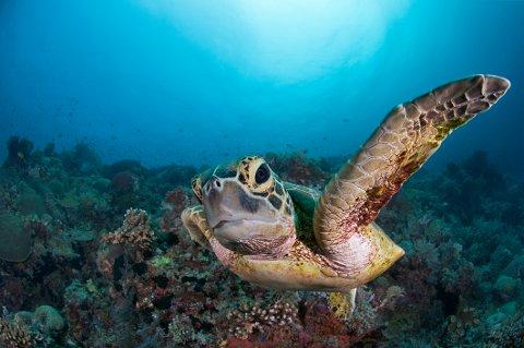 PLAST I HAVET: På grunn av flere utfordringer var det knyttet stor spenning til hvor mye årets aksjon til inntekt for Verdens Naturfond (WWF) og deres kamp mot plast i havet, ville samle inn.