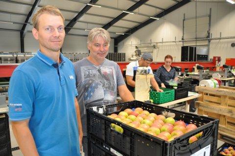 AUKAR 50 PROSENT: Svein Hia (til venstre) og Øystein T. Kleppa ventar leveransar av 600 tonn frukt til pakkeriet i Årdal i haust.