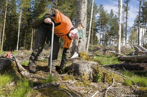 EGNET STED: Med god erfaring i skogplanting, planter skogsarbeider Jørn Isaksen ut tusenvis av grantrær ved hjelp av en hullpipe, som setter pluggen godt i bakken. – Det er best inntil en stubbe, der planten står mest beskyttet, sier Isaksen.