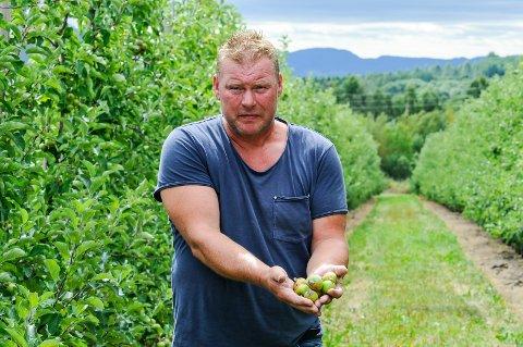 SOLBRENT: Enkelte av eplene til Jostein Jonsås på Nesodden har fått solskade. - Vi vet ikke helt hva som er årsaken, sier han.