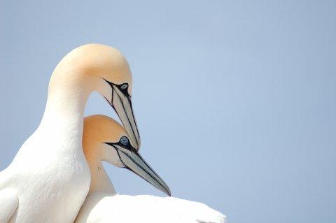 TA HENSYN: Å ta hensyn til fuglene, er en god ting, mener myndighetene.
