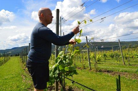 VINGÅRD: Odd Wollberg ved Lerkekåsa vingård. Foto: Camilla Moen