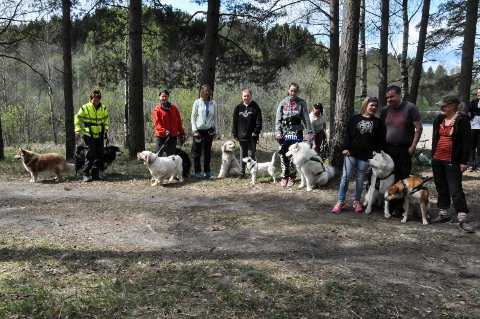 SAMKVEM: Hunder strenger sosial omgang,  208 000 av rundt 560 000 hunder er sikret. Illustrasjonsfoto fra hundetreff i Svingen.