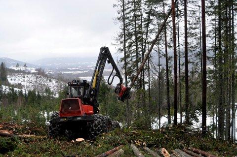 REKORDÅR: Aldri tidligere har det blitt avvirket så mye tømmer i Hjartdal kommune som det ble gjort i 2019.