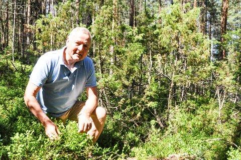 Se på artsmangfold: Truls Ekeberg er ikke redd for å stikke hånda i et vepsebol ved å invitere til tur med skogvern som tema. Det er viktig at politikerne får mer informasjon, og kan se artsmangfoldet, sier han.