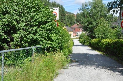 Dårlig sikt: Fylkekommunen og kommunene oppfordrer folk til å klippe hekken slik barna kan ferdes på en oversiktlig skolevei. (Arkivfoto)