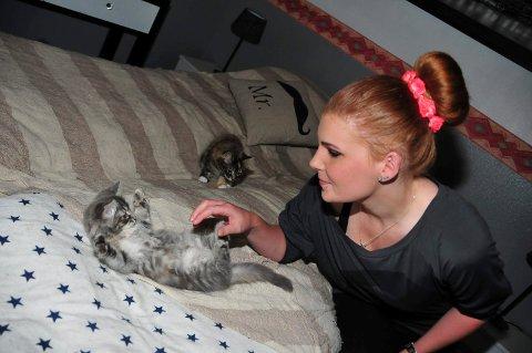 Disse kattungene ble reddet etter mislighold og har fått et godt og harmonisk liv hjemme hos Jeanette Torkildsen og samboeren. Når de blir gamle nok skal de gis bort. Hennes største oppfordring til katteeiere er å sterilisere dem. Både hannkatter og hunnkatter.