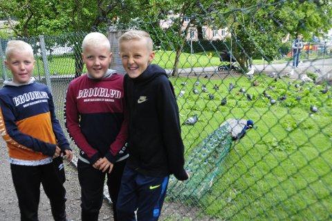 Elias Langeteig Kvalvåg, Olav Langeteig Kvalvåg og Axel Gustav Ryman Kvalvåg har sett påfugler utenfor gjerdet før.