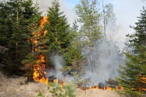 Det er sendt ut gult farevarsel fra skogbrann, primært gress- og lyngbrann. Bildet er fra en skog- og gressbrann i Flekkefjord fra 2011.