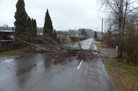 FALT: Dette treet veltet over veien ved skolen på Vestskogen.