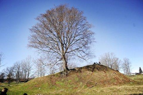 BORREHAUGENE: Vikingskipshaugene i Horten kan bli vurdert for UNESCOs verdensarvliste.