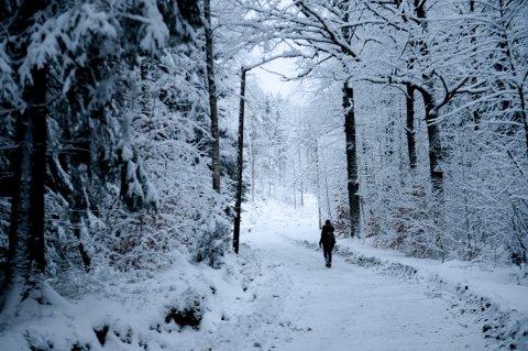 En hyggelig rusletur i skogen om vinteren kan fort bli en sur opplevelse med sterke vindkast. Ved å sjekke den følte temperaturen blir det litt lettere å kle seg etter været.