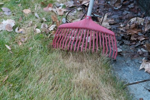 GJØR UNDER-VERKER: En omgang med plenriva er bra. Det fjerner dødt gress og løv som skygger for vekstpunktene til gresset.