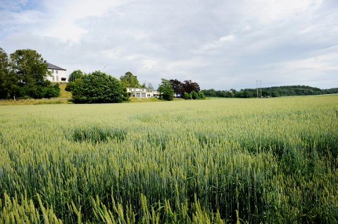 BYGGES IKKE NED LIKEVEL? Området sør for Tinghaug på Borgheim har vært lagt inn i kommuneplanen som bolig- og næringsområde siden 2003, men nå har flere folkevalgte ombestemt seg.