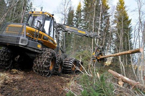 PROVOSEERT: Allskog, med sine 7.700 andelseiere, er provosert over at bondeorganisasjonene vil kutte overføringene til skogbruket med 50 millioner kroner.