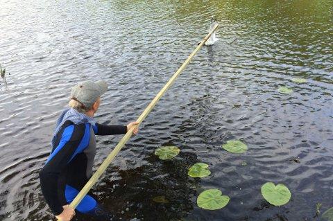 Lars Molleklev i ferd med å hjelpe måka.
