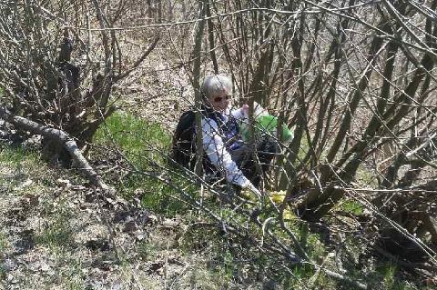 Tutti Apland måtte hjelpes løs fra en område med solbærbusker under ryddeaksjonen søndag.