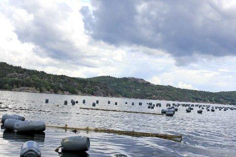Tomme anlegg: Tvedestrand kommune anser blåskjellanleggene som avfall. De har nå varslet Agder Mussels AS om at kommunen plnalegger å fjerne anleggene og sende regningen etterpå.