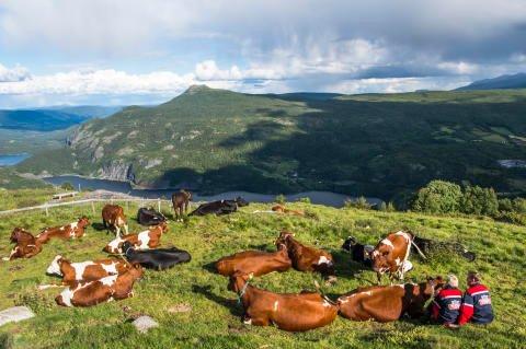 Stølsmjølk fra Valdres er tilbake i år også. Foto:Tine