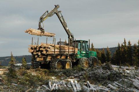 Auke: Verdien på tømmerhogsten aukar i Valdres. FOTO: Bjørn Karsrud