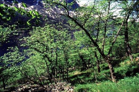 Edellauvskog: Onsdag 22. mai blir det felles skogmøte for Valdres i Etnedal.