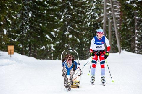 TURBOFART: Nittedal Hundekjørerklubb arrangerte rennet sitt på Lygna i en god del år, men de siste gangene har de i stedet valgt Nordåsen i Nannestad.