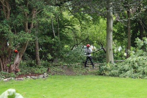 Det var rydding i busker og kratt som skapte bråk.