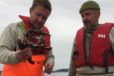 Ordfører Truls Wickholm og Dag Reynolds fra Marinreparatørene studerer en av hummerne de tok opp under prøvefisket.