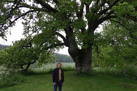 Reddet: Arborist Knut Waagsaas var med å redde giganteika på Røer i 2007. På bildet ses tydelig sprekken som deler treet i to.