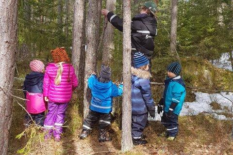 – HER VIL VI HA EN LAVVO: – Jeg fikk nettopp beskjed om at grunneier har sagt ja! Barnehagen har i dag et lite uteområde og er derfor veldig ofte ute på tur. Vi har ordnet en Vipps-konto som kan brukes, og bidrag i alle størrelser ønskes hjertelig velkommen, sier Janne Rygh som har barn i Salamanderskogen Barnehage på Fjellstrand.